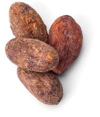 Caffe dell'arte - fava di cacao-4