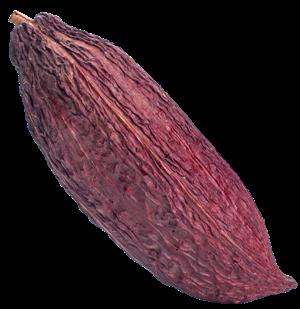 Caffedell_arte - fava di cacao-2